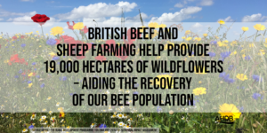 Aldens Beef and Lamb farming can help the environment.