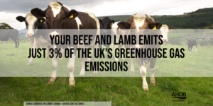 Just 3% of the UK's greenhouse gas emissions is from Beef and Lamb