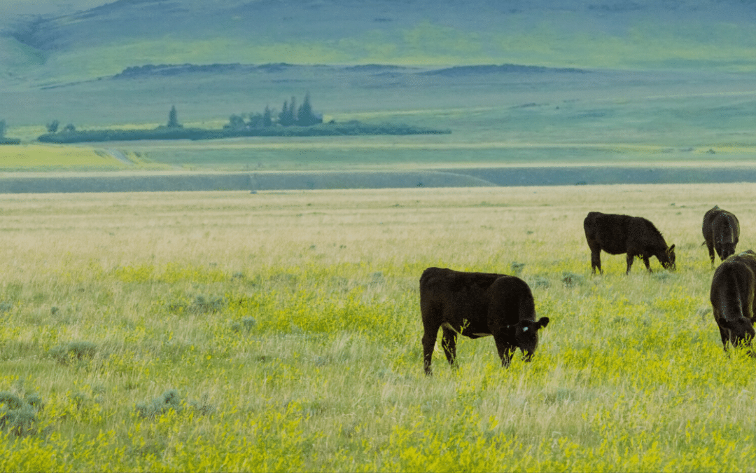 Why is grass-fed beef better?